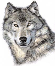Sibirischer Wolf von Nicole Zeug