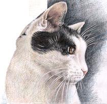 Cats View - Katzenblick von Nicole Zeug