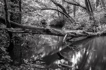 Umgestürzter Baum von Lars Niebling