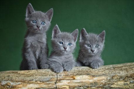 Dsc-5051-dot-rb-n-kittens1t-10-14