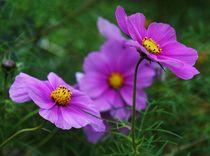 Blumen Makro von anowi