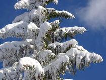 Schneebedeckte Tanne von Lars Niebling
