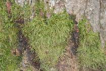 Baum mit Herz von Michael Amrit Bleichner