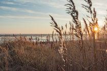 Goldener Oktober auf Sylt von Beate Zoellner