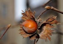 Herbstfrucht von alana