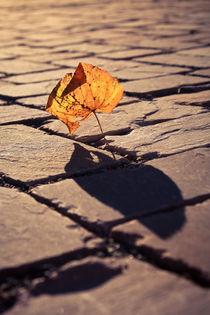 Herbstschatten by sylbe