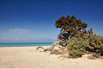 Baum am Strand der Insel Chrisi bei Kreta by Mark Gassner
