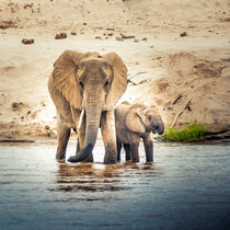 Elephant Mama with baby von Jim DeLillo