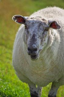 Das Schaf  von AD DESIGN Photo + PhotoArt