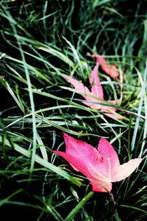Der Herbst kommt by framboise