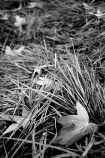 Blätter s/w von framboise