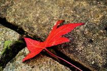 Das rote Blatt by framboise