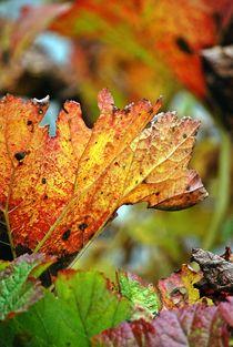 Herbstblätter 3 von loewenherz-artwork