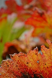 Herbstblätter 6 von loewenherz-artwork