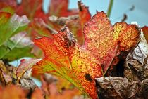Herbstblätter 4 von loewenherz-artwork