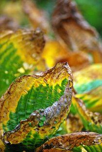 Herbstblätter 5 von loewenherz-artwork