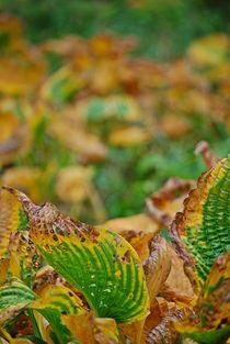 Herbstblätter 2 by loewenherz-artwork