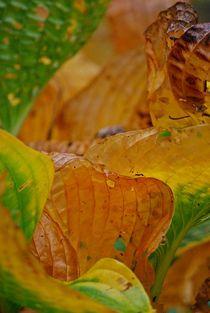 Herbstblätter 1 by loewenherz-artwork