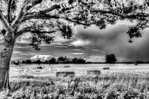 The Field Beyond The Tree by David Pyatt
