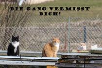 Die Gang vermisst Dich! by melanie-mp