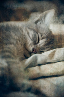 Kitten's Sweet Dream #01 by loriental-photography