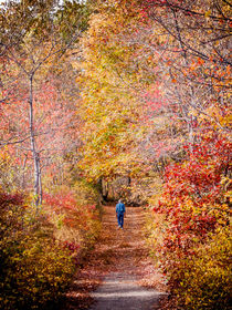 Autumn Stroll by Jim DeLillo