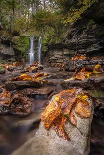 autumn leaves by Bor Rojnik