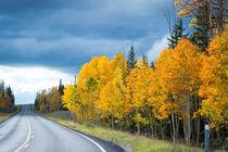 Autumn road von Felix Pütsch