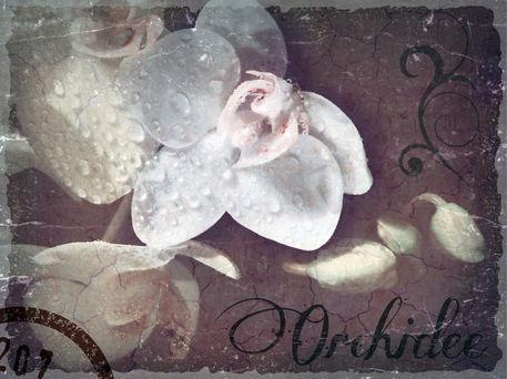Orchidee-alt