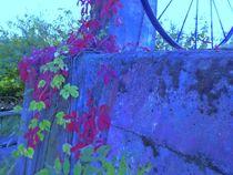 Die alte Mauer by Reiner Poser