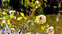 Autumn rose von Leopold Brix