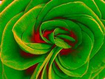 Befunky-dscn0697-dot-jpg-green-and-red-rose