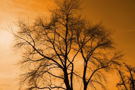 Baum-005d