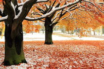 Winterlicher Herbst by Christine Hutterer