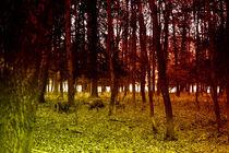 Autumn woods with pigs von Joseph Borsi