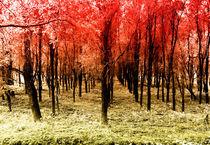 Autumn woods col by Joseph Borsi