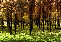 Autumn woods col4 by Joseph Borsi
