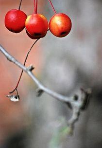 Herbstboten 14 von loewenherz-artwork