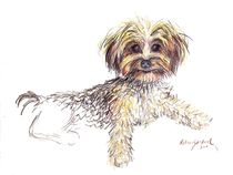 Yorkie Puppy named Joy von Deborah Willard