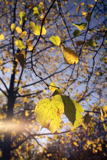 Leaves and light von sylbe