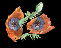 Two poppies by Christina Rahm