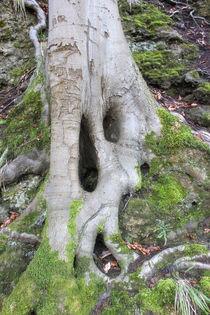 Roots von mario-s