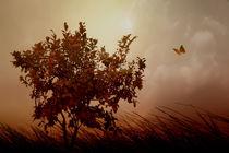 Autumn-serenity-2