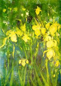 Schwertlilien von Barbara Ast