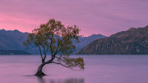 Lone Tree von Sebastian Warneke