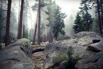 Fog in the woods von Felix Pütsch
