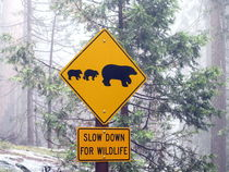 Slow down for wildlife by Mr and Mrs Quirynen