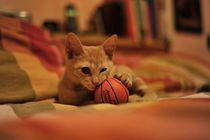 cute puppy cat  by emanuele molinari
