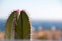 Der Kaktus von starcy