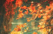 Herbstlicht von Heiko Döhrling